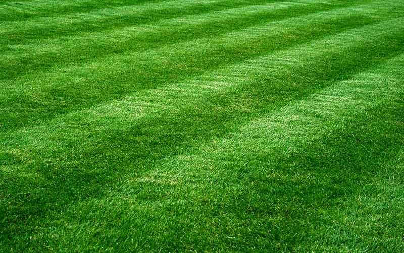 How To Keep Your Lawn Lush And Healthy