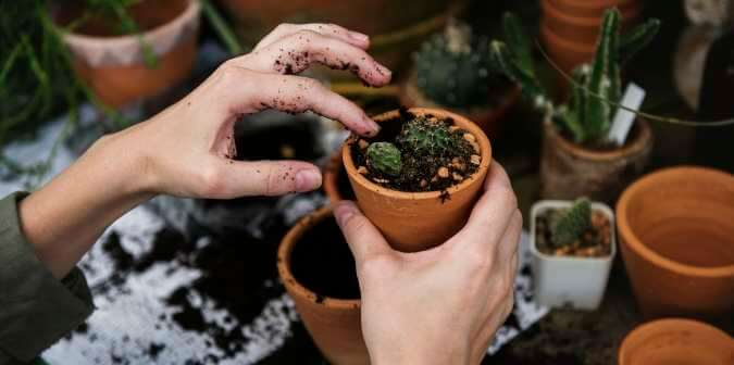 potting-plants