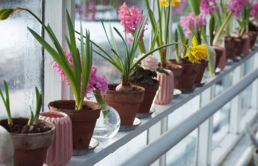 row-of-plants-in-clay-pots-on-a-window-sill