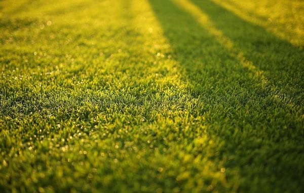 "5 Ideas for a ""Next-Level"" Lawn Mowing Business"