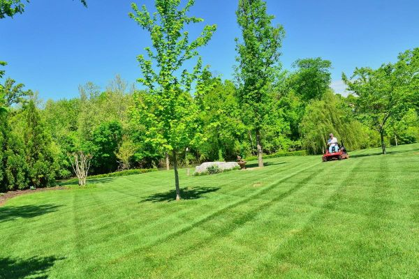 Pros and Cons of Starting a Lawn Mowing Business