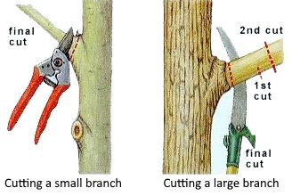 where to cut the tree